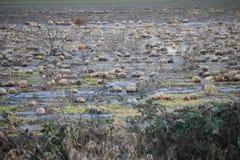 Campo del melón de la descomposición Fotografía de archivo