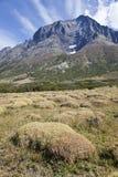 Campo del muschio a Torres del Paine Immagini Stock Libere da Diritti