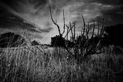 Campo del New Mexico fotografie stock libere da diritti