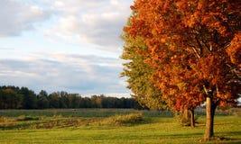 Campo del otoño Foto de archivo libre de regalías