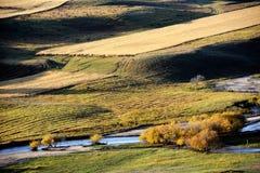 Campo del otoño con la corriente y los árboles de abedul de oro Fotos de archivo