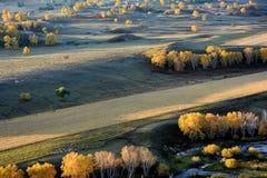 Campo del otoño con la corriente y los árboles de abedul de oro Foto de archivo libre de regalías