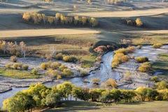 Campo del otoño con la corriente y los árboles de abedul de oro Foto de archivo