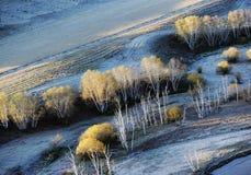 Campo del otoño con los árboles de abedul de oro Imagenes de archivo