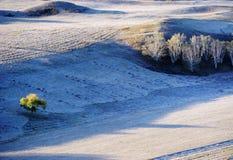 Campo del otoño con los árboles de abedul de oro Fotos de archivo