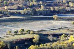 Campo del otoño con los árboles de abedul de oro Foto de archivo libre de regalías
