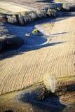 Campo del otoño con los árboles de abedul de oro Fotografía de archivo