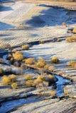 Campo del otoño con los árboles de abedul de oro Imagen de archivo