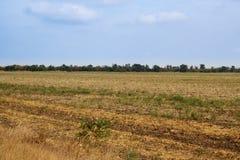 Campo del otoño con los árboles y la hierba amarilla Fotos de archivo