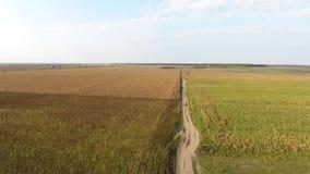 Campo del otoño, visión desde el abejón almacen de video