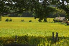 Campo del país Imagenes de archivo