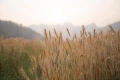 Campo del paesaggio Fotografie Stock