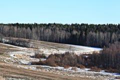 Campo del paesaggio della foresta della primavera Immagini Stock Libere da Diritti