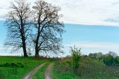 Campo del paesaggio della primavera, strada del campo, alberi e percorso nel campo Fotografie Stock Libere da Diritti