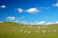 Campo del paese Fotografia Stock
