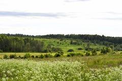 Campo del paisaje Imagenes de archivo
