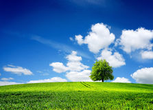 Campo del paisaje de la primavera de la hierba Imagenes de archivo