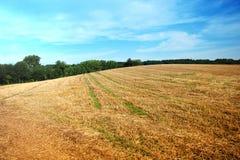 Campo del paisaje del verano Imagen de archivo