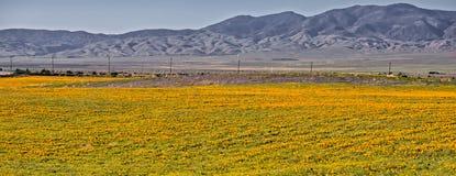 Campo del papavero della valle dell'antilope Immagini Stock Libere da Diritti