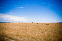 Campo del pasto Fotografía de archivo libre de regalías