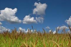 Campo del pasto imagen de archivo libre de regalías