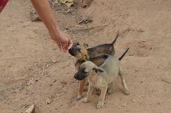 Campo del perrito Foto de archivo libre de regalías