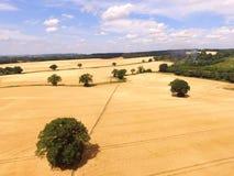 Campo del raccolto dell'orzo in Inghilterra del sud Fotografia Stock