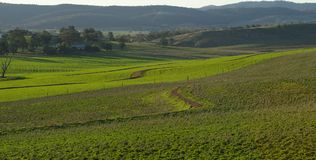 Campo del raccolto e pascere Immagine Stock Libera da Diritti