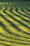 Campo del raccolto effettuato. Fotografia Stock