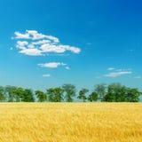 Campo del raccolto sotto cielo blu profondo Fotografie Stock Libere da Diritti
