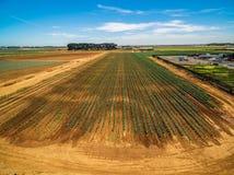 Campo del raccolto verde il giorno di estate luminoso Immagini Stock Libere da Diritti