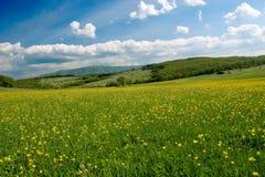 Campo del resorte con las flores y las nubes Foto de archivo libre de regalías