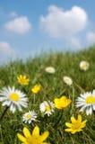 Campo del resorte en la floración Imágenes de archivo libres de regalías