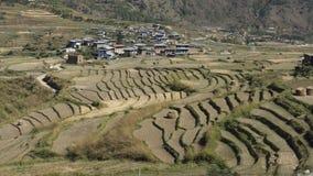 Campo del riso e del villaggio Regno del Bhutan Fotografia Stock