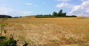Campo del ` s dell'agricoltore di estate Fotografia Stock
