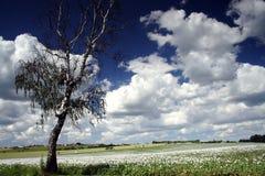 Campo del seme di papavero Fotografie Stock Libere da Diritti