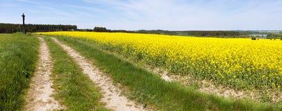 Campo del seme di ravizzone, del canola o della colza Immagine Stock Libera da Diritti