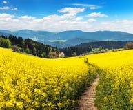 Campo del seme di ravizzone, del canola o della colza con il modo del percorso Fotografia Stock Libera da Diritti