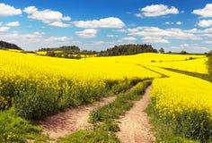 Campo del seme di ravizzone, del canola o della colza con la strada rurale Immagini Stock Libere da Diritti