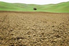 Campo del suelo de arcilla con el fondo verde en Toscana Imágenes de archivo libres de regalías