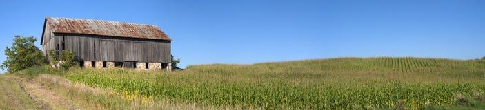 Campo del tallo del maíz del panorama del campo de maíz del granero panorámico Fotos de archivo