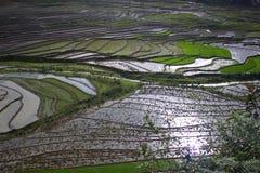 Campo del terrazzo del riso di Sapa, Sapa, LaoCai Fotografia Stock