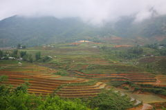 Campo del terrazzo del riso in Sapa, Sapa, Lao Cai Immagine Stock Libera da Diritti