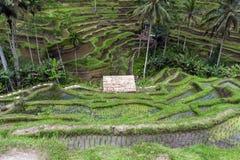 Campo del terrazzo del riso, Ubud, Bali, Indonesia Immagini Stock Libere da Diritti