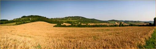 Campo del trigo fotografía de archivo