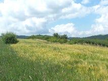 Campo del trigo fotos de archivo