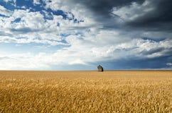Campo del trigo bajo un cielo azul Fotos de archivo libres de regalías