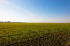 Campo del trigo de invierno foto de archivo libre de regalías