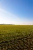 Campo del trigo de invierno fotos de archivo libres de regalías