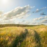 Campo del trigo del oro y del cielo azul imagenes de archivo